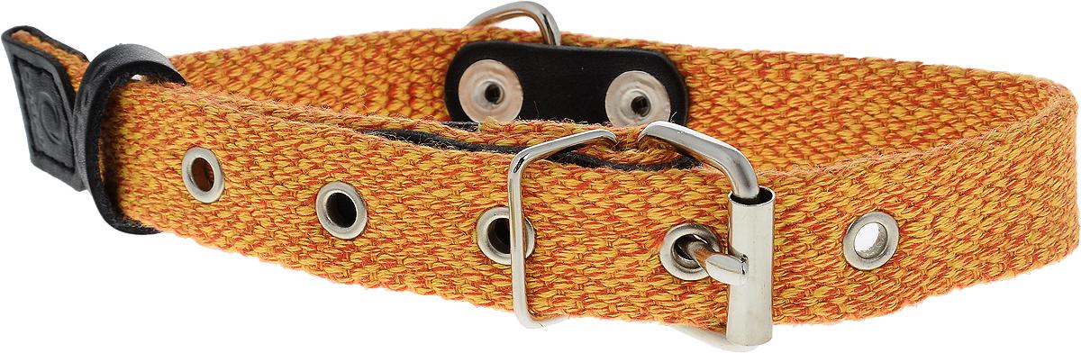 Ошейник для собак CoLLaR, цвет: оранжевый, ширина 2 см, обхват шеи 31-41 см0120710Ошейник для собак CoLLaR, выполненный из хлопка с кожаными вставками, устойчив к влажности и перепадам температур. Крепкие металлические элементы делают ошейник надежным и долговечным.Изделие отличается высоким качеством, удобством и универсальностью.Размер ошейника регулируется при помощи пряжки, зафиксированной на одном из 5 отверстий. Минимальный обхват шеи: 31 см. Максимальный обхват шеи: 41 см. Ширина: 2 см.