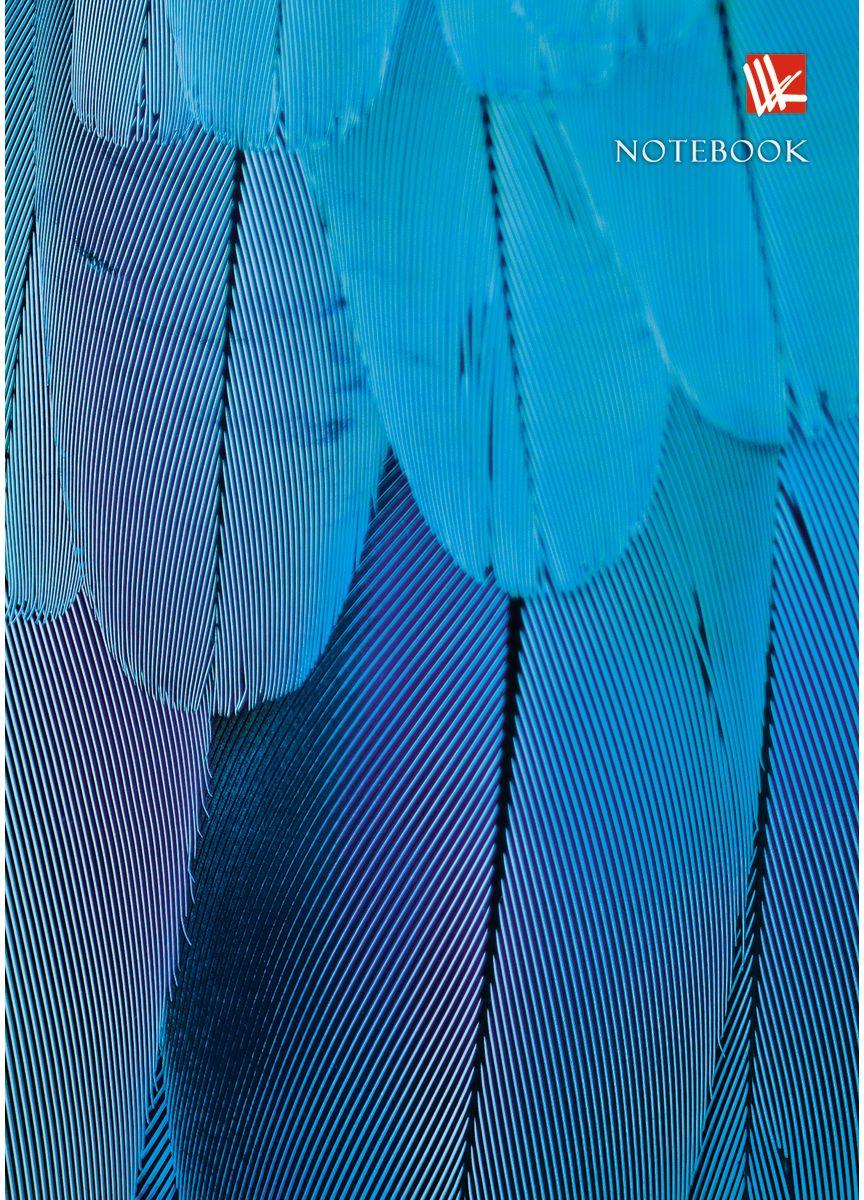 Канц-Эксмо Записная книжка Живая планета Голубое оперение 80 листов в клетку72523WDЗаписная книжка в твердом переплете А6, 80 листов. Обложка с глянцевой ламинацией. Форзацы белые. Бумага – офсет 60 г/м2, клетка. Сшитый блок.