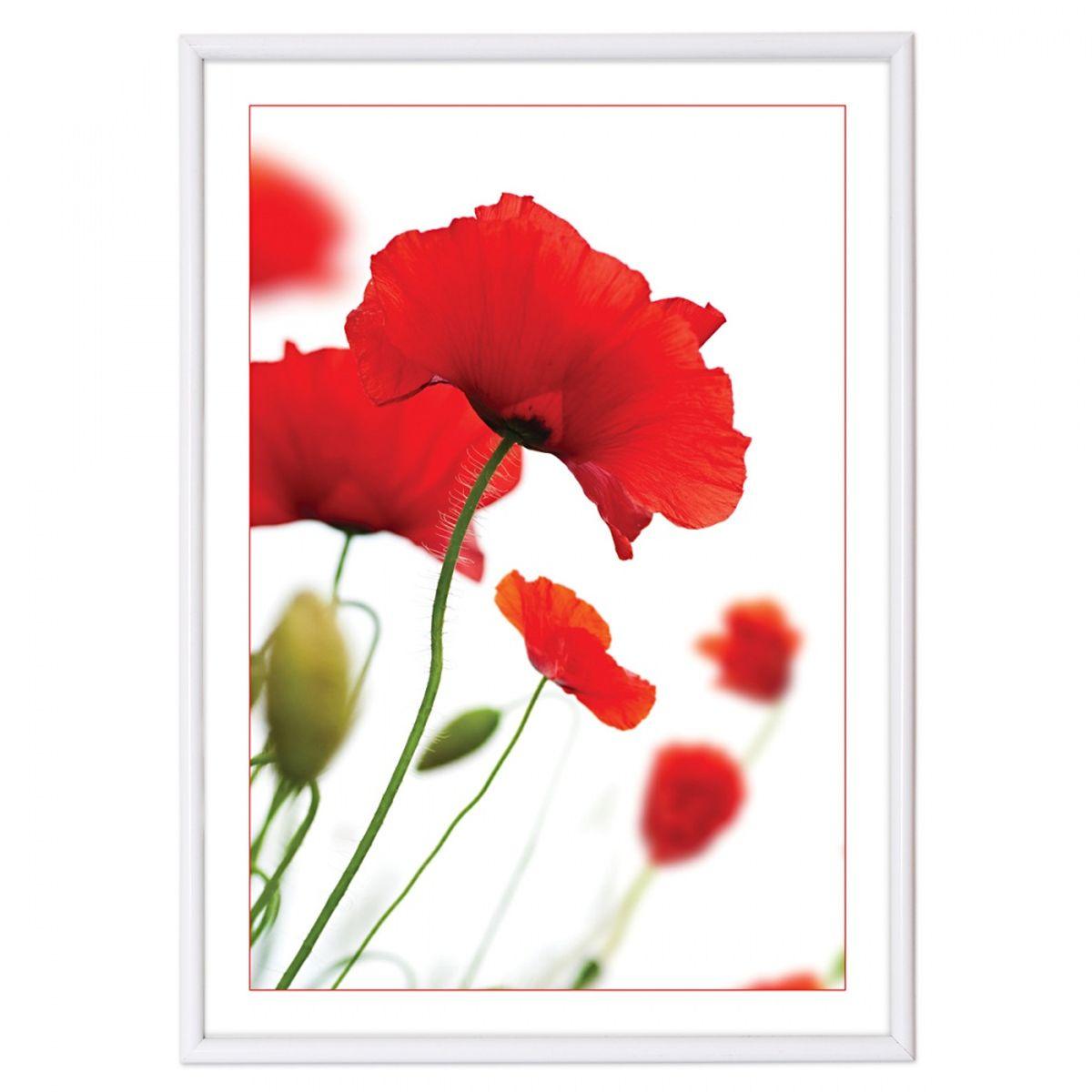 Фоторамка Pioneer Poster Lux White, цвет: белый, 21 х 29,7 см15796 PRРамка для фотографий, дипломов, сертификатов, грамот, лицензий и других документов формата А4. Размер: 21х30 см. Цвет бронза. Материал: пластик.