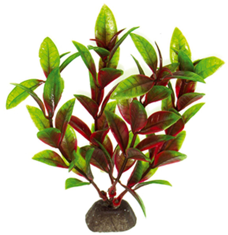 Искусственное растение для аквариума Dezzie, 10 см. 56020145602014Подводное искусственное растение для аквариума Dezzie является неотъемлемой частью композиции аквариума, радует глаз, а также может быть уютным убежищем для рыб и других обитателей аквариума. Пластиковое растение имеет устойчивое дно, которое не нуждается в дополнительном утяжелении и легко устанавливается в грунт. Растение очень практично в использовании, имеет стойкую к воздействию воды окраску и не требует обременительного ухода. Его можно легко достать и протереть тряпкой во время уборки аквариума. Растения из пластика создадут неповторимый дизайн пресноводного или морского аквариума. Высота растения: 10 см.