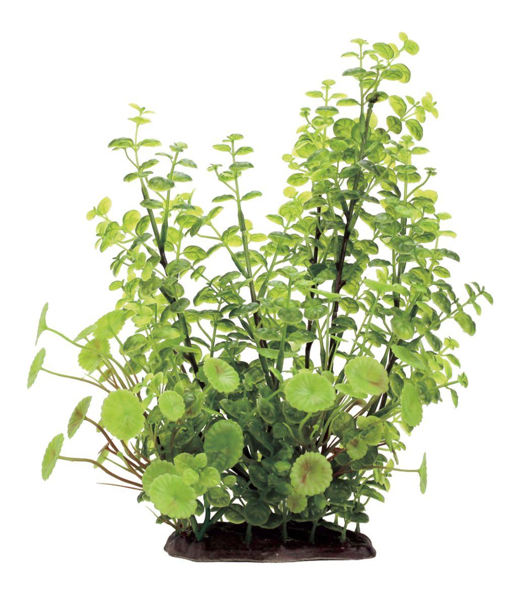 Растение для аквариума ArtUniq Кардамин, высота 35 смART-1130104Растение для аквариума ArtUniq Кардамин, высота 35 см