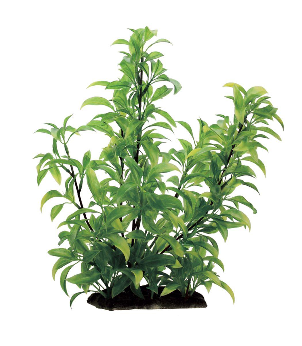 Растение для аквариума ArtUniq Стаурогин, высота 35 смART-1130109Растение для аквариума ArtUniq Стаурогин, высота 35 см