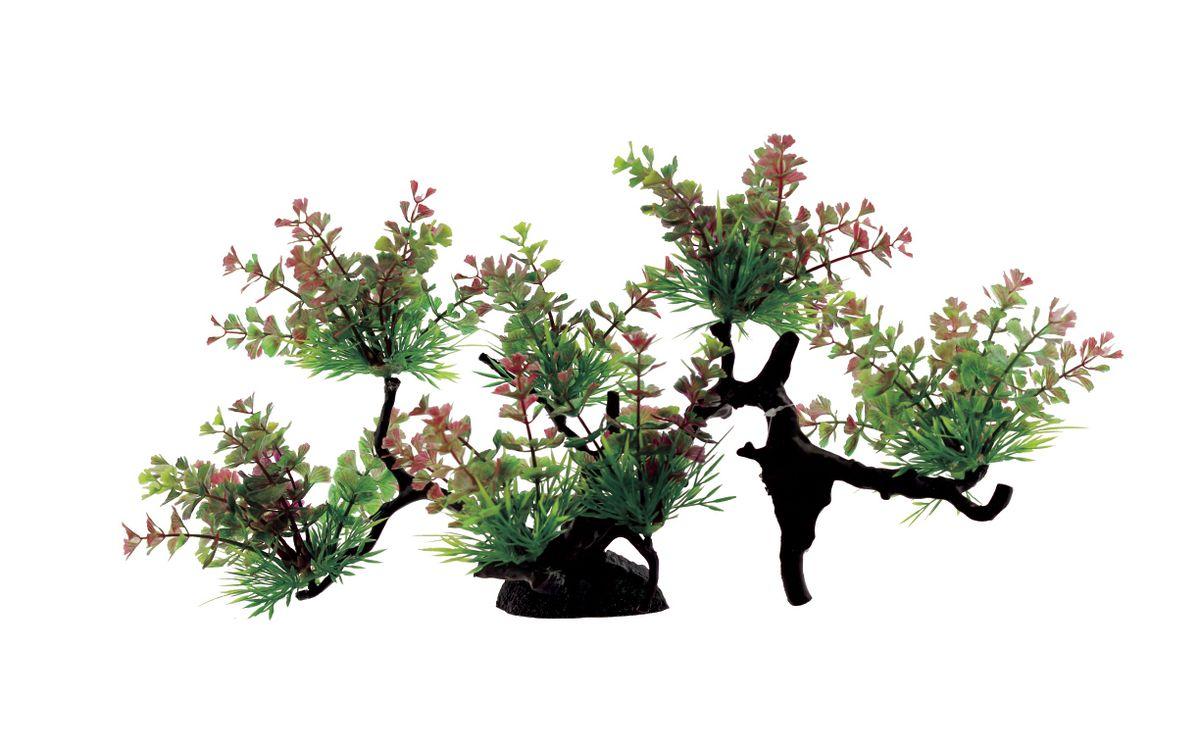 Композиция из растений для аквариума ArtUniq Щитолистник трехраздельный, 40 x 16 x 22 смART-1130310Композиция из растений для аквариума ArtUniq Щитолистник трехраздельный, 40 x 16 x 22 см