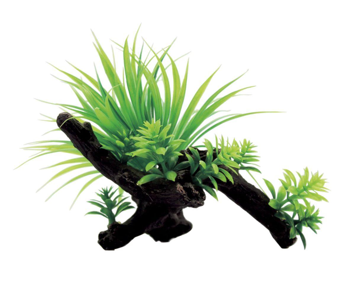 Композиция из растений для аквариума ArtUniq Саггитария на коряге, 15 x 12 x 11 см0120710Композиция из растений для аквариума ArtUniq Саггитария на коряге, 15 x 12 x 11 см
