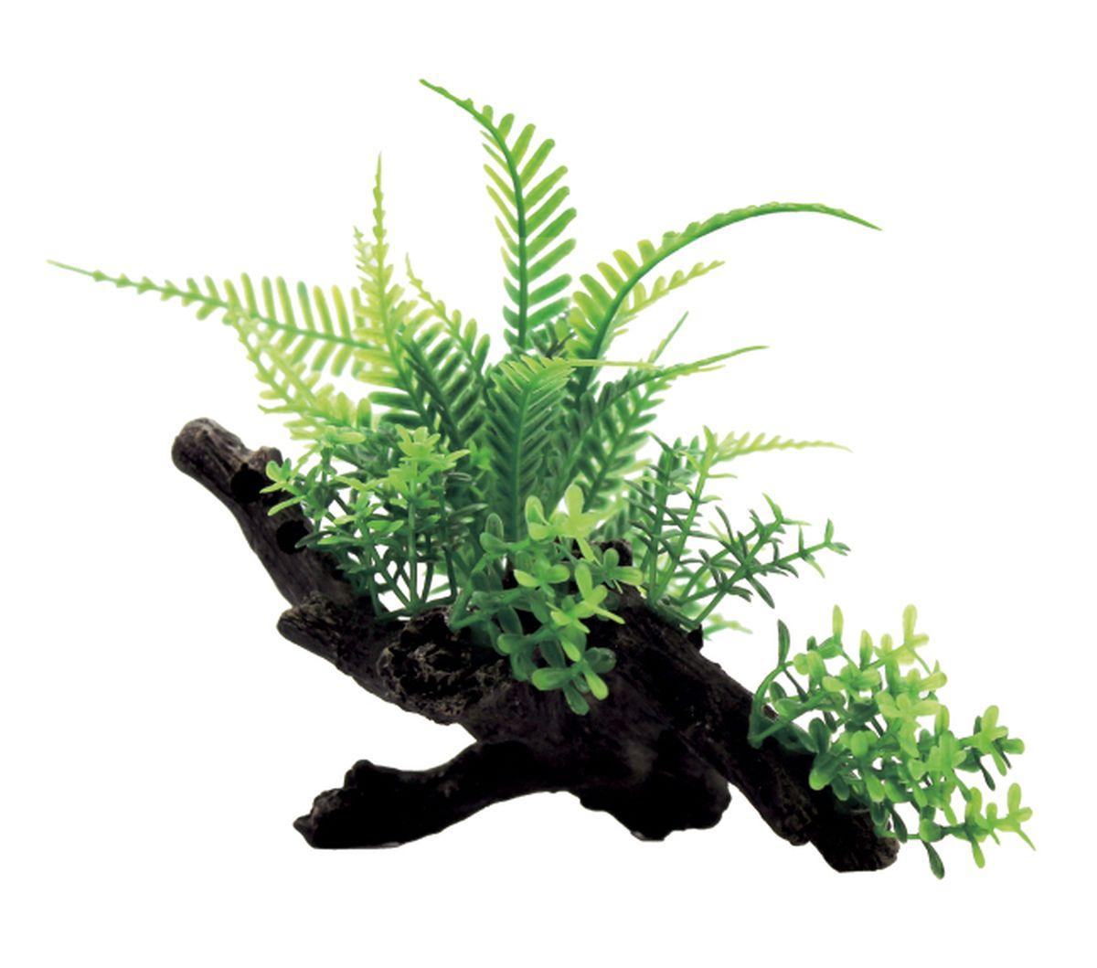 Композиция из растений для аквариума ArtUniq Папоротник на коряге, 20 x 12 x 12 см0120710Композиция из растений для аквариума ArtUniq Папоротник на коряге, 20 x 12 x 12 см