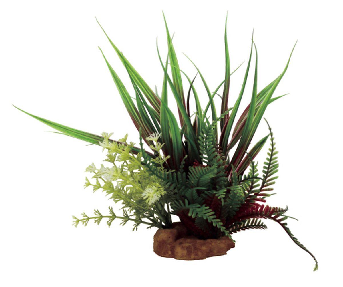 Композиция из растений для аквариума ArtUniq Акорус красно-зеленый, 15 x 13 x 24 смART-1130901Композиция из растений для аквариума ArtUniq Акорус красно-зеленый, 15 x 13 x 24 см