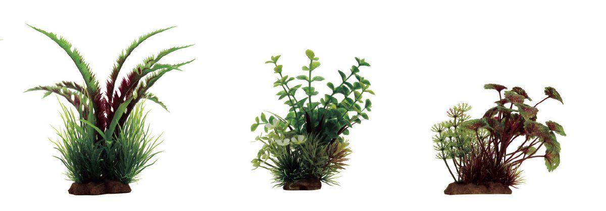Растение для аквариума ArtUniq Дизиготека красно-зеленая, бакопа, щитолистник красно-зеленый, высота 10-20 см, 3 шт0120710Растение для аквариума ArtUniq Дизиготека красно-зеленая, бакопа, щитолистник красно-зеленый, высота 10-20 см, 3 шт