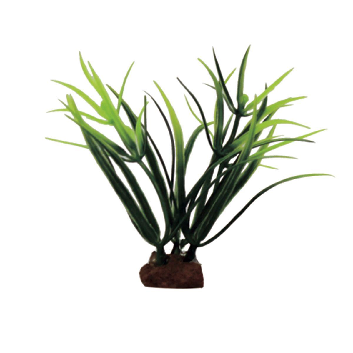 Растение для аквариума ArtUniq Лагаросифон мадагаскарский , высота 10 см, 6 штART-1170525Растение для аквариума ArtUniq Лагаросифон мадагаскарский , высота 10 см, 6 шт