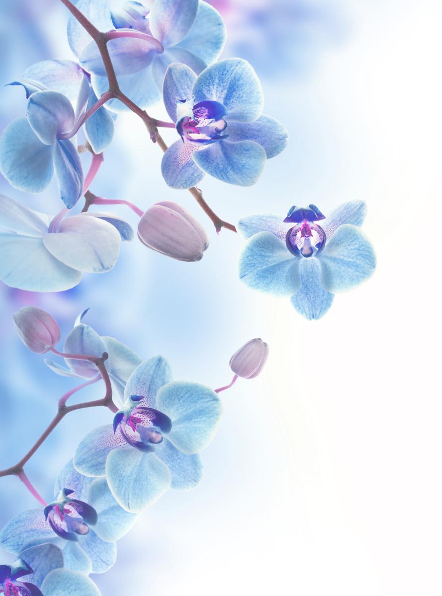 Фотообои Barton Wallpapers Цветы, 200 x 270 см. F17402F17402Флизелиновые фотообои Barton Wallpapers Цветы. Превосходное цифровое качество изображения, экологичные, износостойкие, не пахнут, стойки к выцветанию, просты в поклейке. Размер: ширина 200 см, длина 270 см.