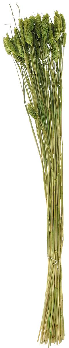Украшение декоративное Lovemark Пучок. Фалярис, цвет: зеленый, длина 77 см6009_зеленыйКаждое время года по-своему прекрасно. Однако, как часто поздней осенью и долгой зимой нам не хватает тепла, ярких весенних красок, которые дарят цветы. Этот недостаток можно восполнить благодаря композициям из сухоцветов. Букет из сухих цветов способен сохранять свою красоту на протяжении всего года, а уход за ним минимален. Очень удобны сухоцветы и для использования их людьми с повышенной аллергической реакцией на пыльцу растений и различные резкие запахи. Подчеркните свой неповторимый вкус в интерьере с помощью нежной композиции из сухих цветов. Длина украшения: 77 см.
