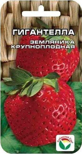 Семена Сибирский сад Клубника. ГигантеллаBP-00000231Особо крупный сорт земляники, плоды весом 50-60гр, темно-бордовые, вкусные. Куст крупный раскидистый.