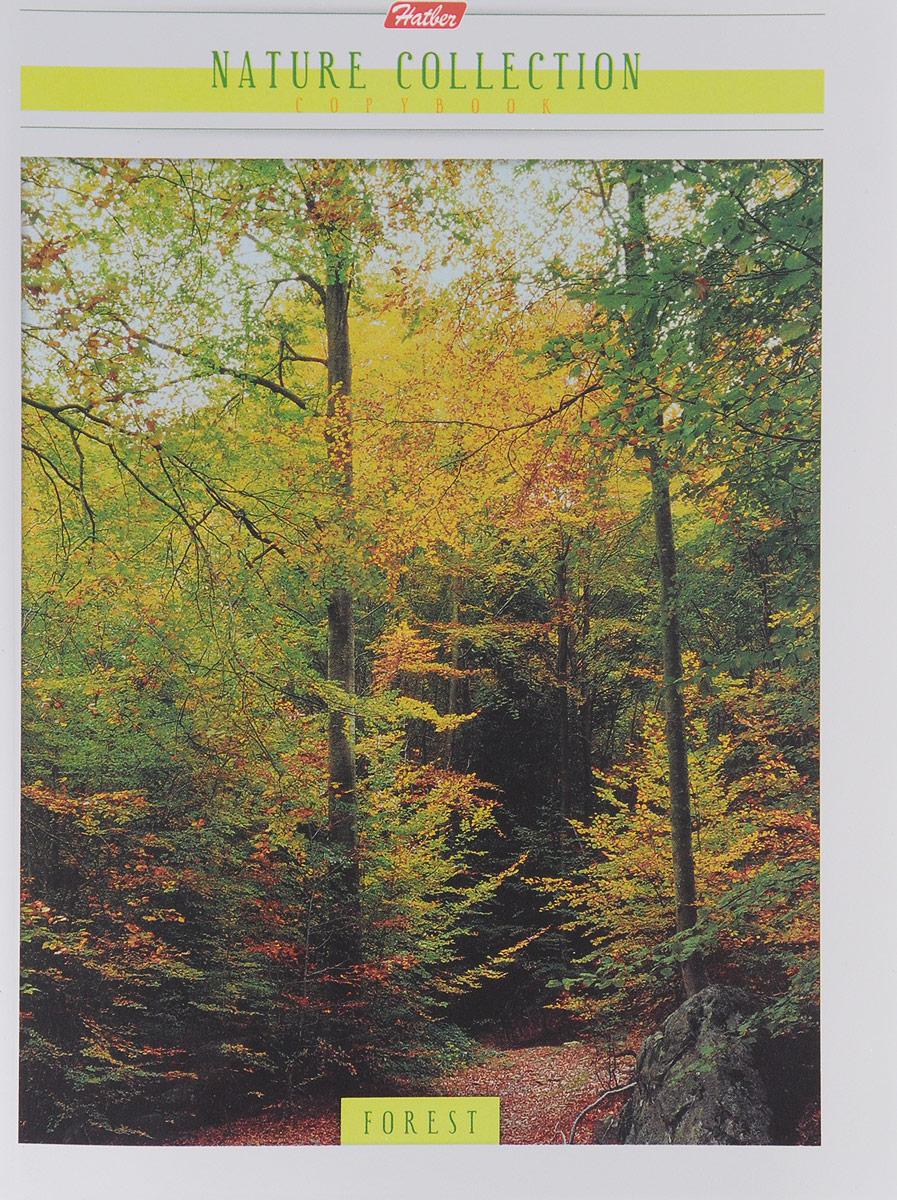Hatber Тетрадь Forest 96 листов в клетку72523WDТетрадь Hatber Forest отлично подойдет для занятий школьнику или студенту.Обложка выполнена из плотного картона. Внутренний блок тетради, соединенный металлическими скрепками, состоит из 96 листов белой бумаги в голубую клетку с полями.
